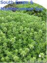 「地中海と南ヨーロッパのハーブ12種セット」ハーブ苗おまかせ12種セット  9vp×12ポット Herbs of the South Erope & Mediterranean Sea