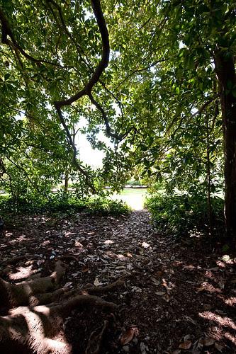 Magnolia Tree Grove.