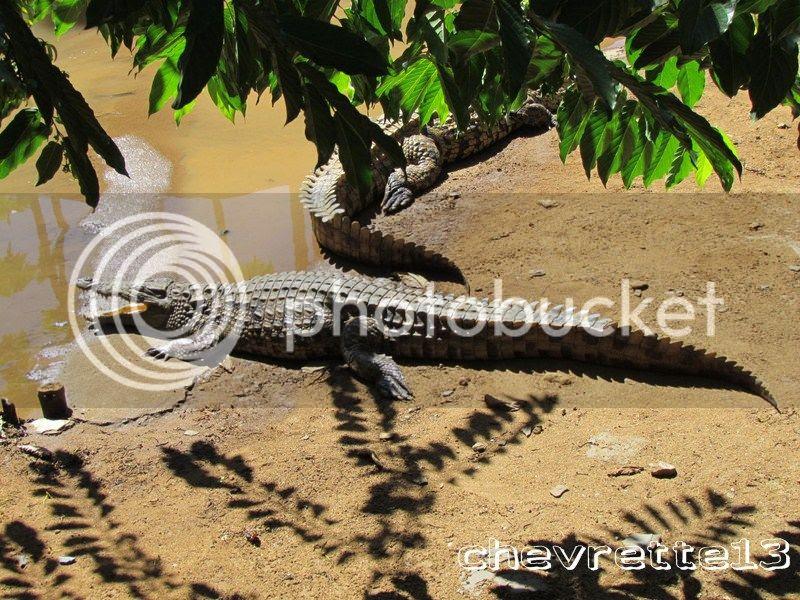 http://i1252.photobucket.com/albums/hh578/chevrette13/Madagascar/IMG_2318Copier_zpsc773a66c.jpg