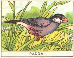 oiseaux mart 7