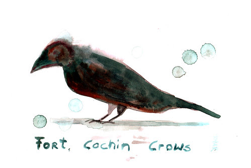 Fort Kochi Crow