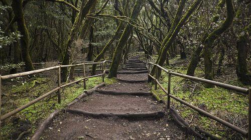 1280px-Bosque_Encantado,_Parque_nacional_de_Garajonay,_La_Gomera,_España,_2012-12-14,_DD_19