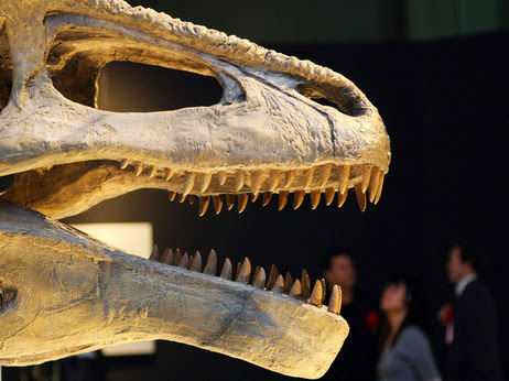 """Sometimes the fossil record comes with teeth: Mapusaurus roseae on display in the """"Dinosaurs of Gondwana"""" exhibit in 2009 at the National Museum of Nature and Science in Tokyo."""