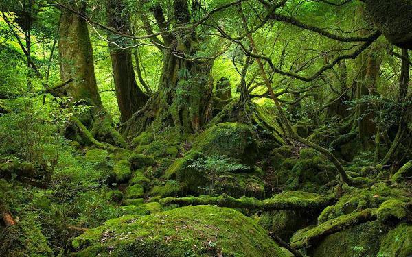 El bosque de Aokigahara en Japón