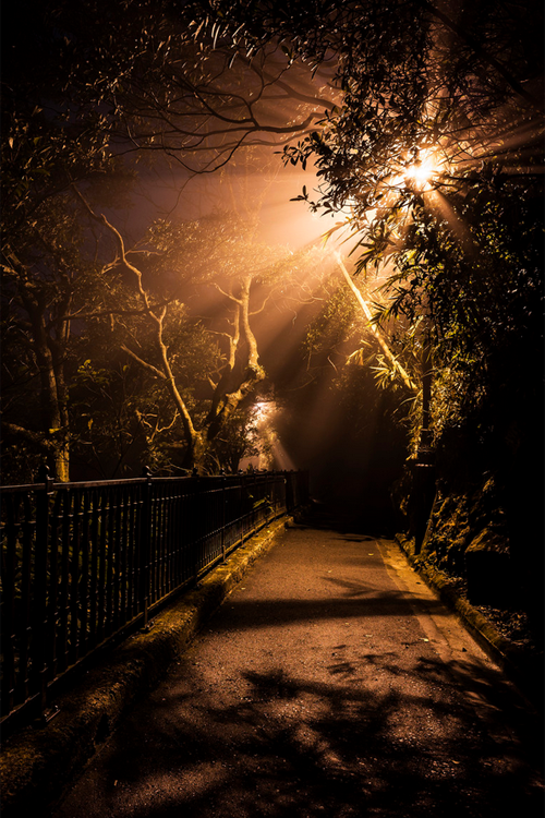 plasmatics-life:  Midnight in Mist ~ By Toby Leung   Come walk with me down the dark, secluded walkway. Ignore the dark shadows and the moaning wind. Don't look back—no one is following you. No one alive but we don't know about The Dead. You might have picked up some deadly followers. The The Dead Games have begun.