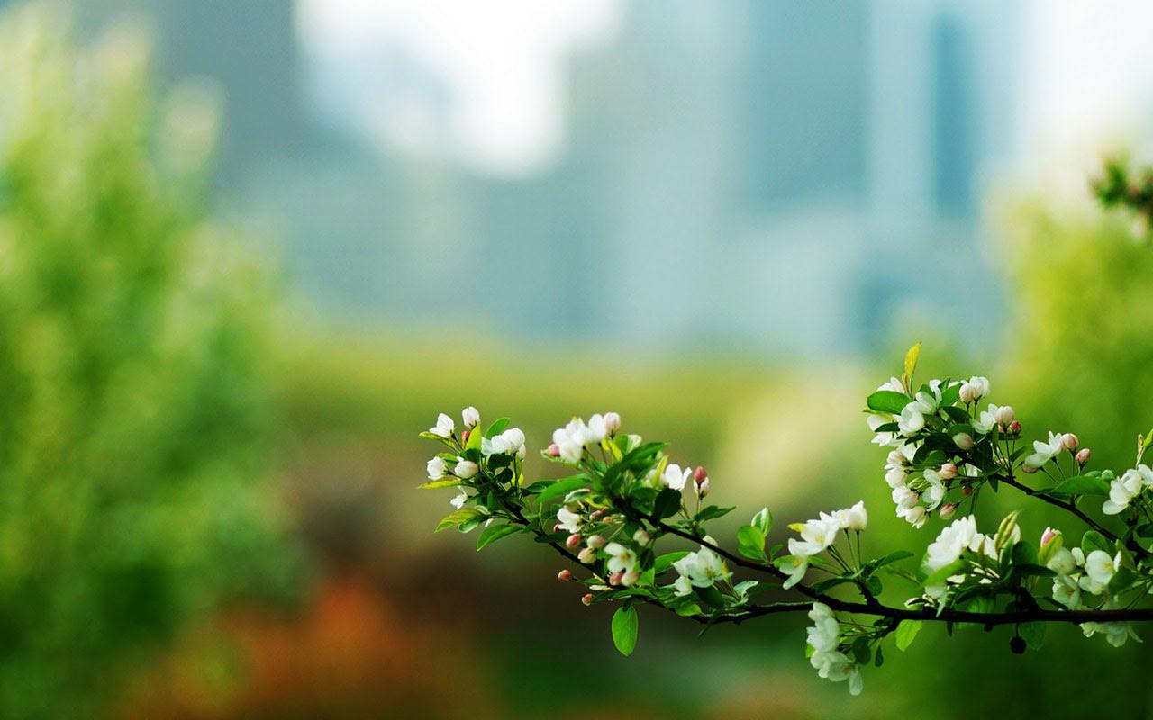 Elegant Floral Backgrounds Landscape Traffic Club