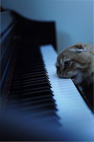 I WILL learn to piano. I WILL.