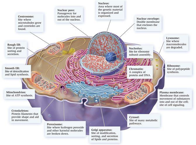 Geissler U0026 39 S Biology Corner  September 2012