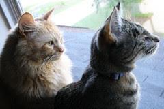 Jasper sharing the window with Maggie