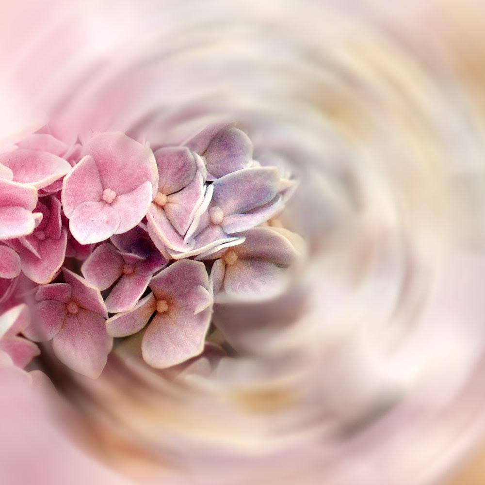 Pink Flower Fine Art Photograph Color My World -Hydrangea Pastel Lavender Nature Surreal Dreamy Decor - galleryzooart