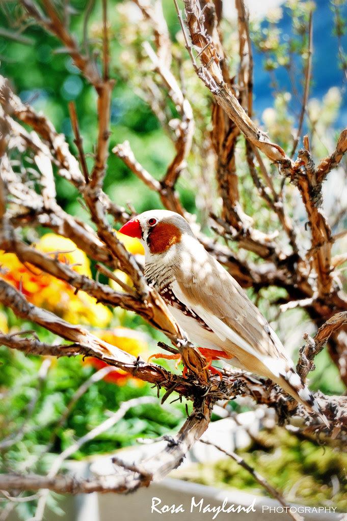 Bird 1 11 bis