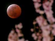 仙台市内で観測された皆既月食と桜=4日(撮影・土谷創造)