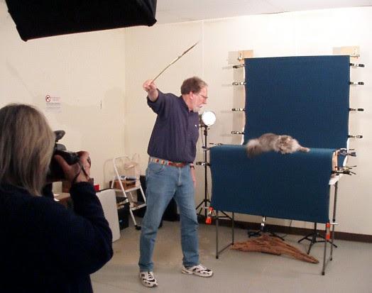 Helmi Flick cat photography