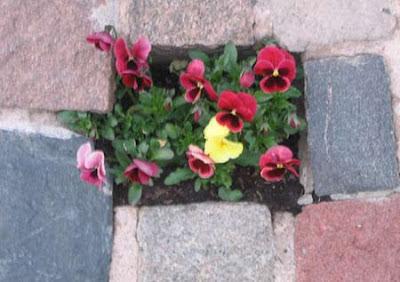 оформление цветами камней