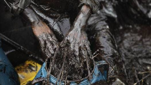 MAREA NEGRA. Con sus propias manos, un pescador intenta colocar en un bidón el crudo extraído. (AP)
