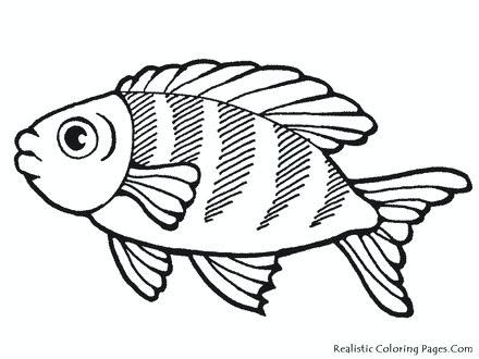 Beta Fish Drawing | Free download on ClipArtMag