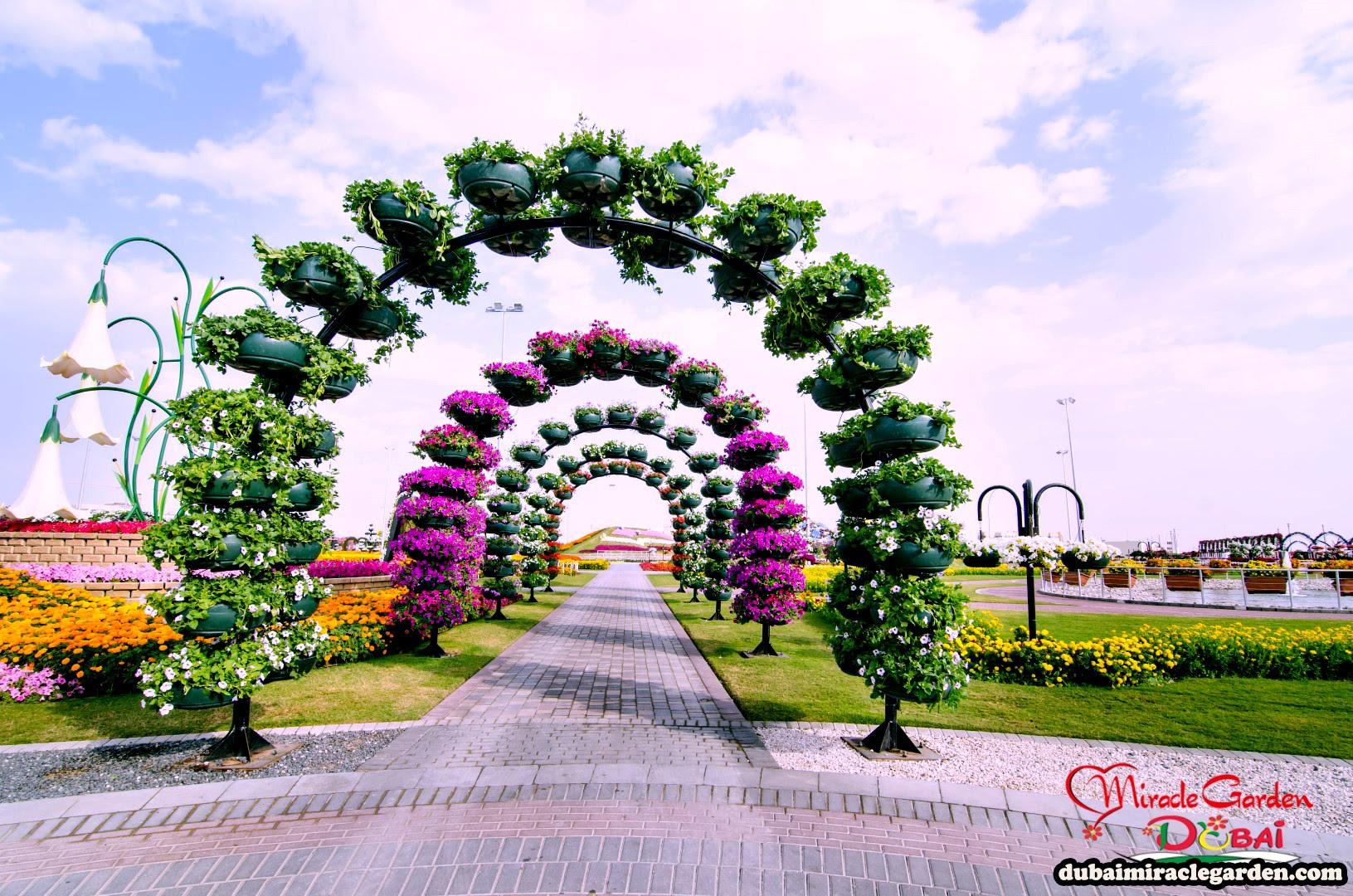 Dubai Miracle Garden 26