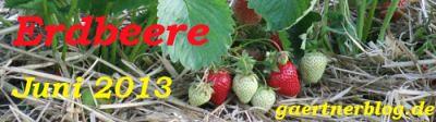Garten-Koch-Event Juni 2013: Erdbeere [20.06.2013]