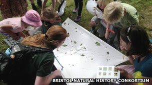 Analysing what insects fell out of a tree