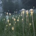 Impresionantes Bruce Munro Instalaciones LED iluminan los jardines de Longwood (20) Cortesía de Bruce Munro
