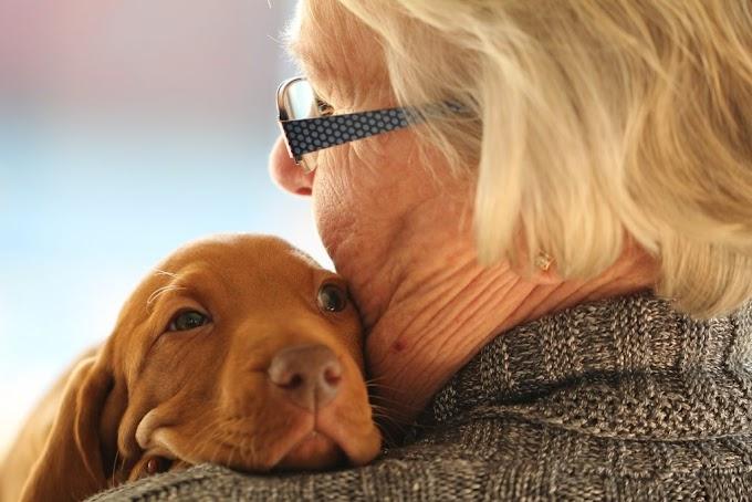 ¿Por qué los perros pequeños viven más años que los grandes?