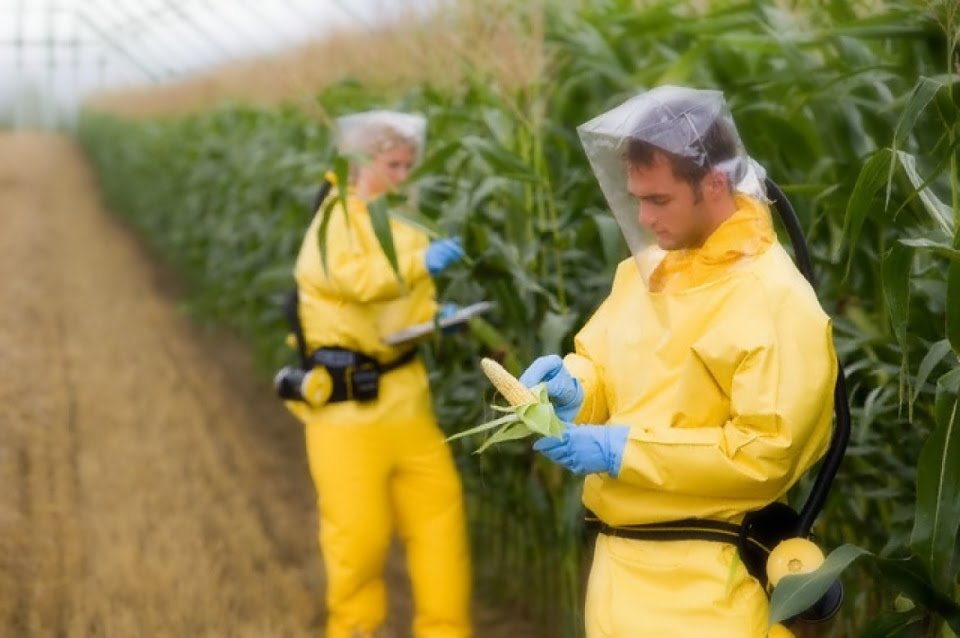 Global GMO Free Coalition Set to Help Fund World's Largest GMO Safety Study