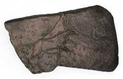 Gravure sur pierre fin paléolithique capsien