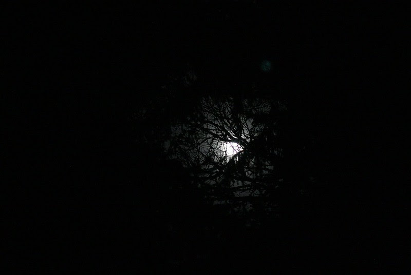 moon light softened by the clouds and through our tall trees