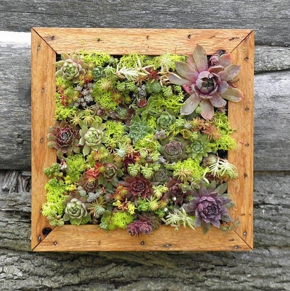 Painting with Succulents: Plant a Shadowbox Planter for a Living ...