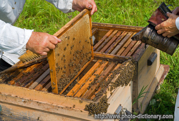 http://www.photo-dictionary.com/photofiles/list/1788/6889beehive.jpg