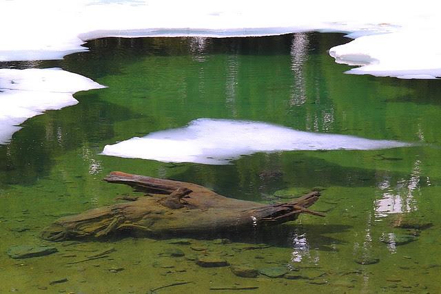 IMG_3939 Floating Ice on Emerald Lake, Lassen Volcanic National Park