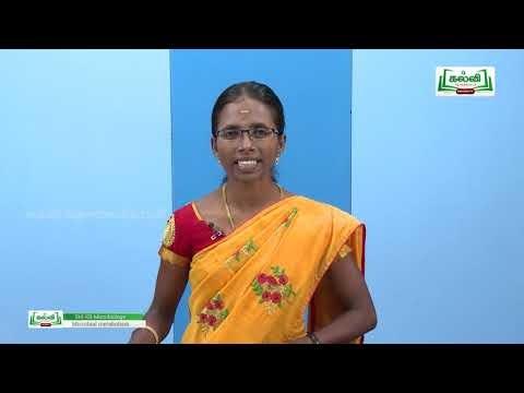 12th Microbiology நுண்ணுயிர்களின் வளர்சிதை மாற்றம் இயல் 4 Kalvi TV