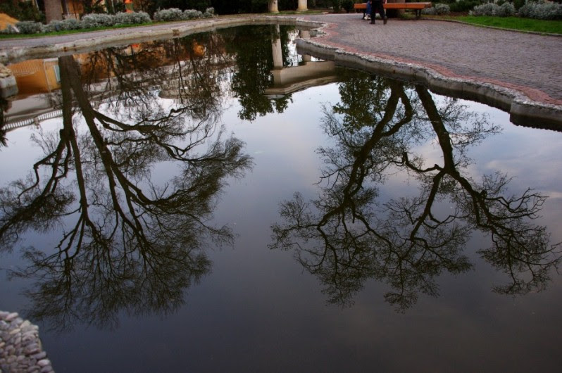 Деревья отражаются в воде. Фото
