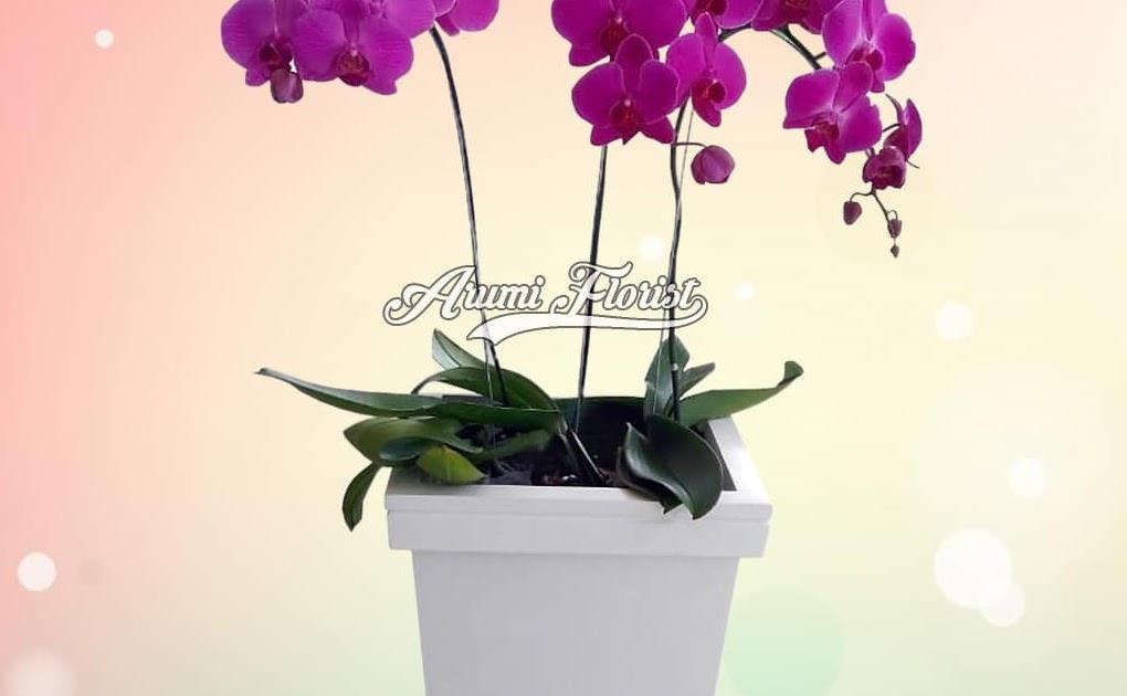 26 Gambar Bunga Anggrek Setangkai Gambar Bunga Hd