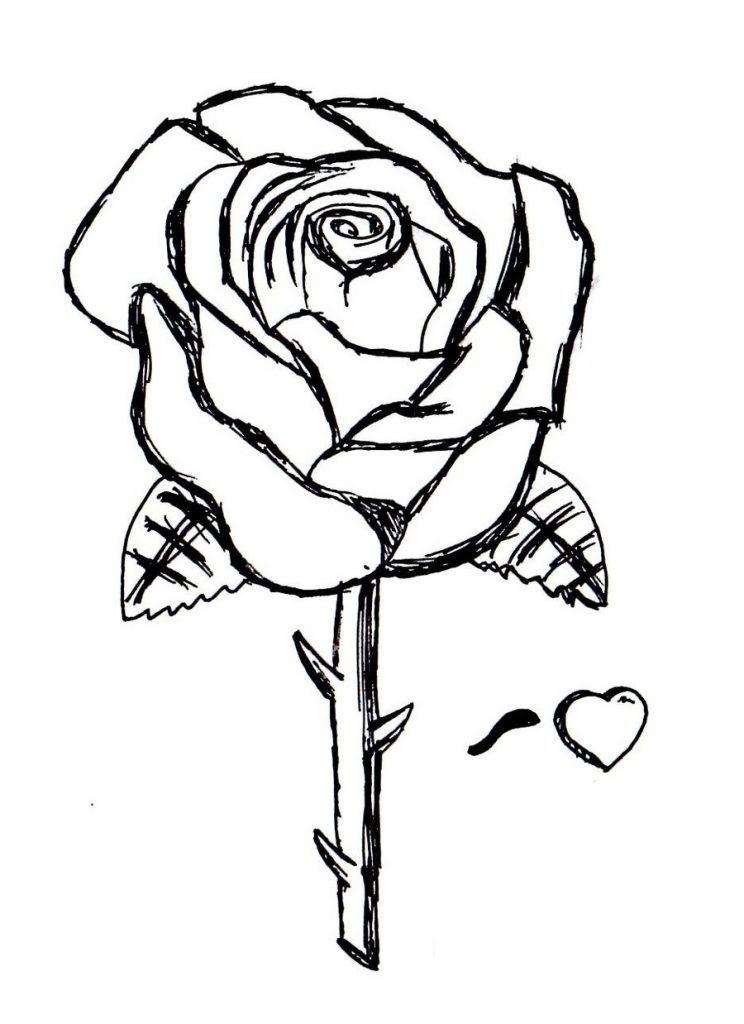 Immagine stampabile disegni di rosa colorare disegni for Disegni inazuma eleven da stampare