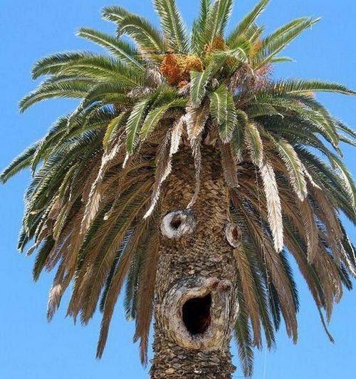 Resultado de imagem para crazy tree