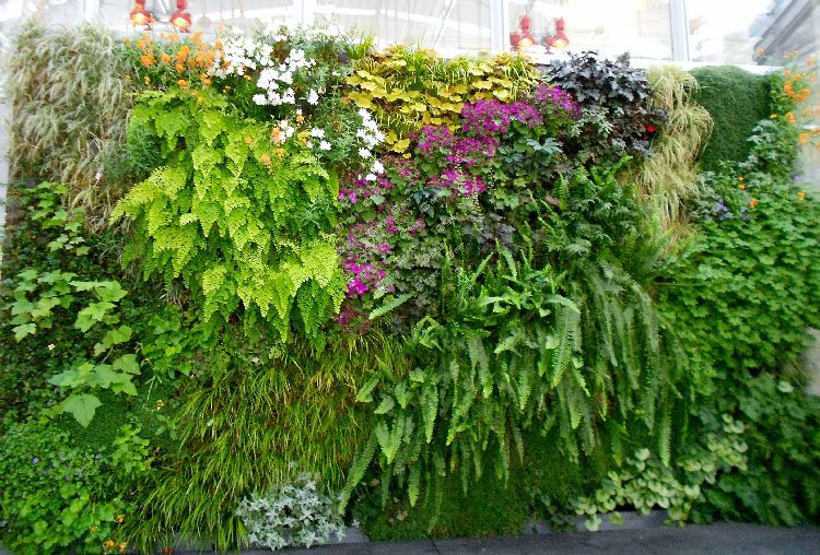 Best plants for your vertical living wall garden
