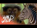 National Geographic Wild Live TV Channel