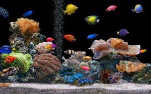 خلفية اسماك طبيعية متحركة وحية جميلة ورائعة للاندرويد