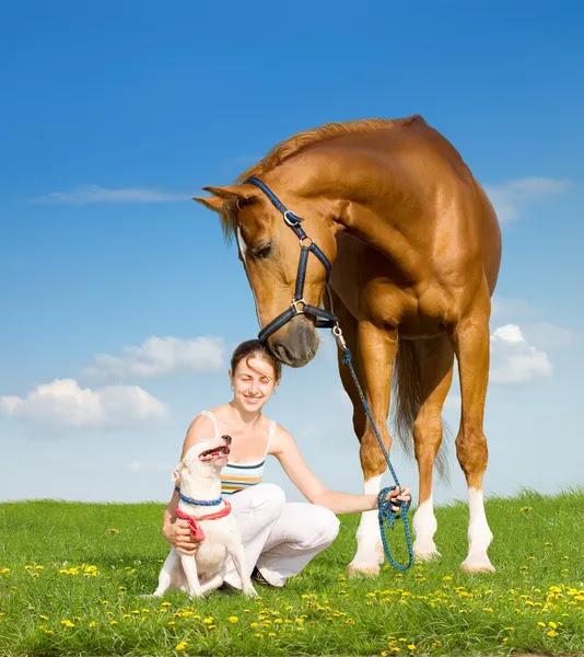 Menina, cão e cavalo castanho — Fotografia de Stock #1530067