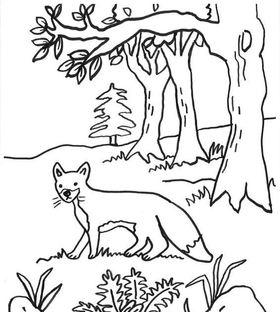 waldtiere ausmalbilder wald  ausmalbilder tiere im wald