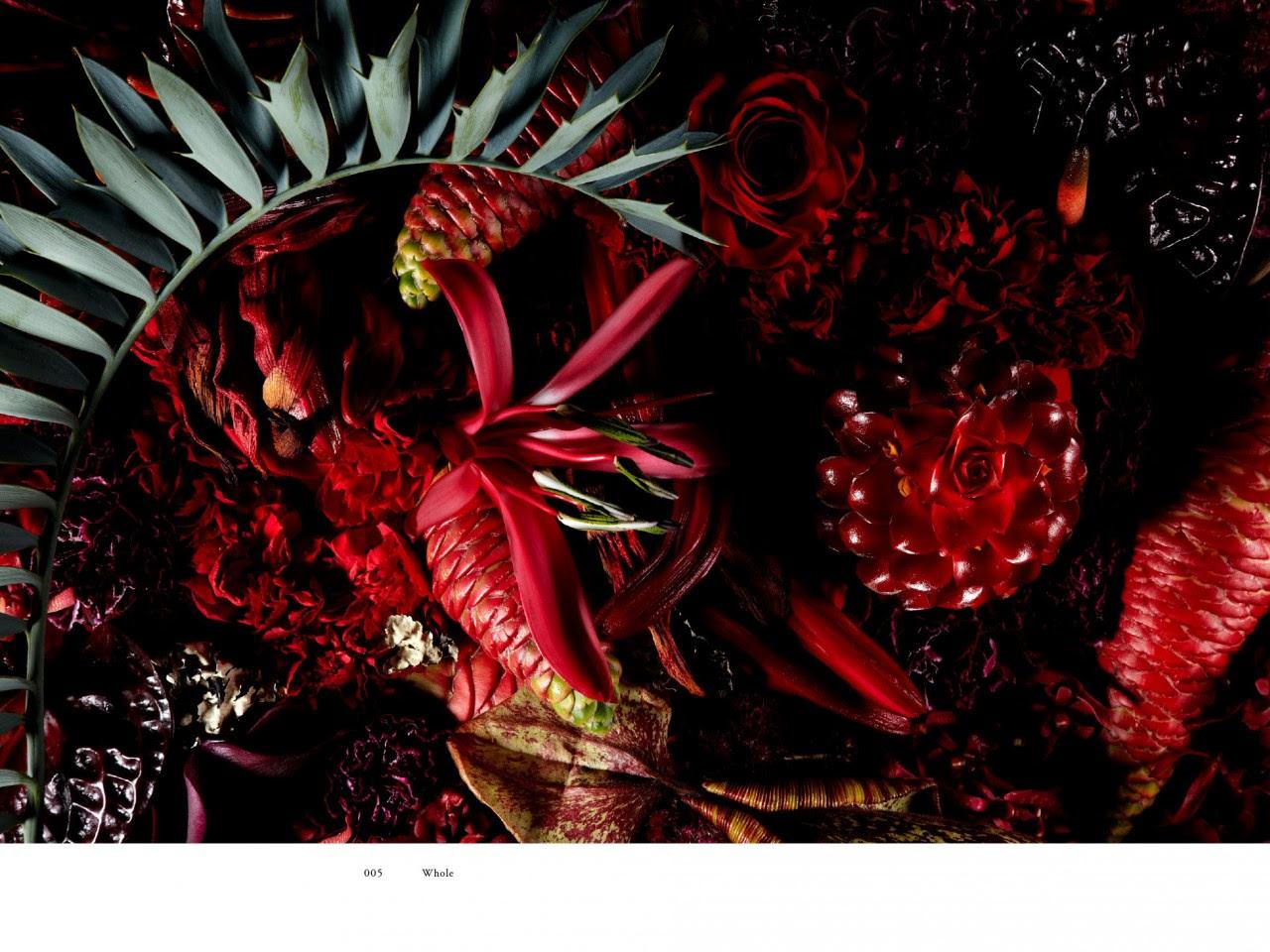 encyclopedie-fleurs-04