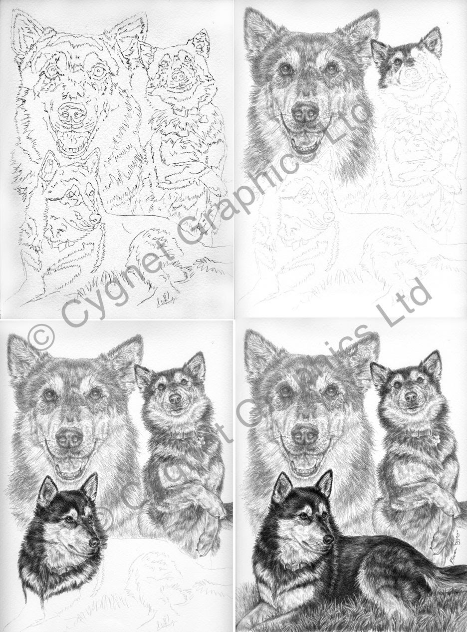 Stages of a custom pet portrait in pencil by Kelli Swan