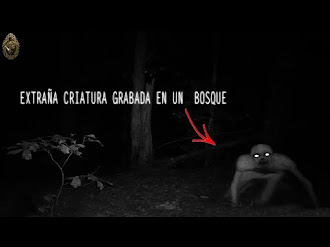 Una extraña criatura captada en vídeo encontrado en el bosque