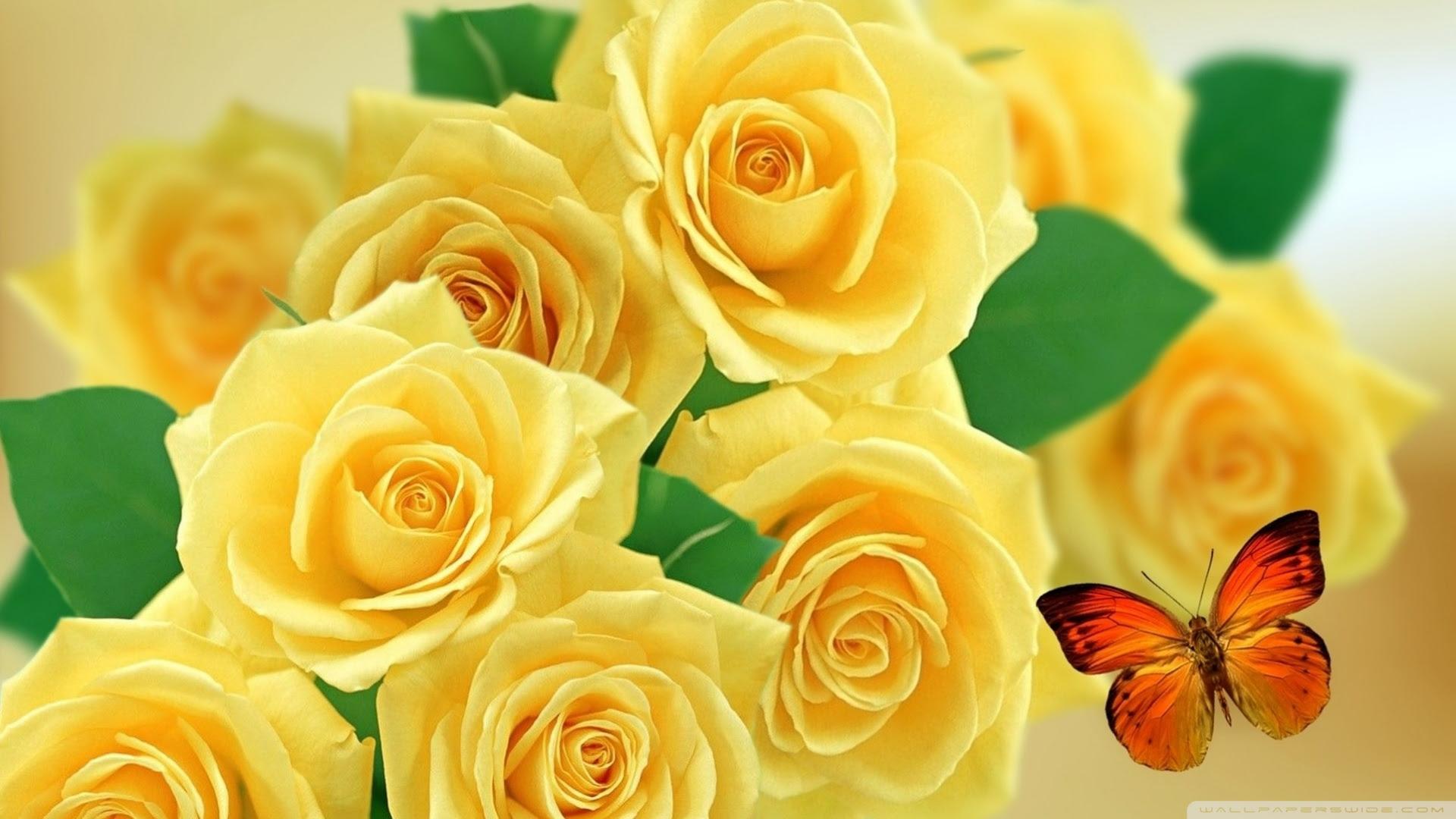 Hd Yellow Rose Wallpaper