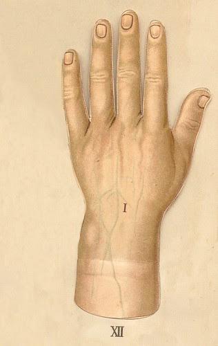 anatomie main 1