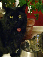 Huggy Bear watching Maggie drink