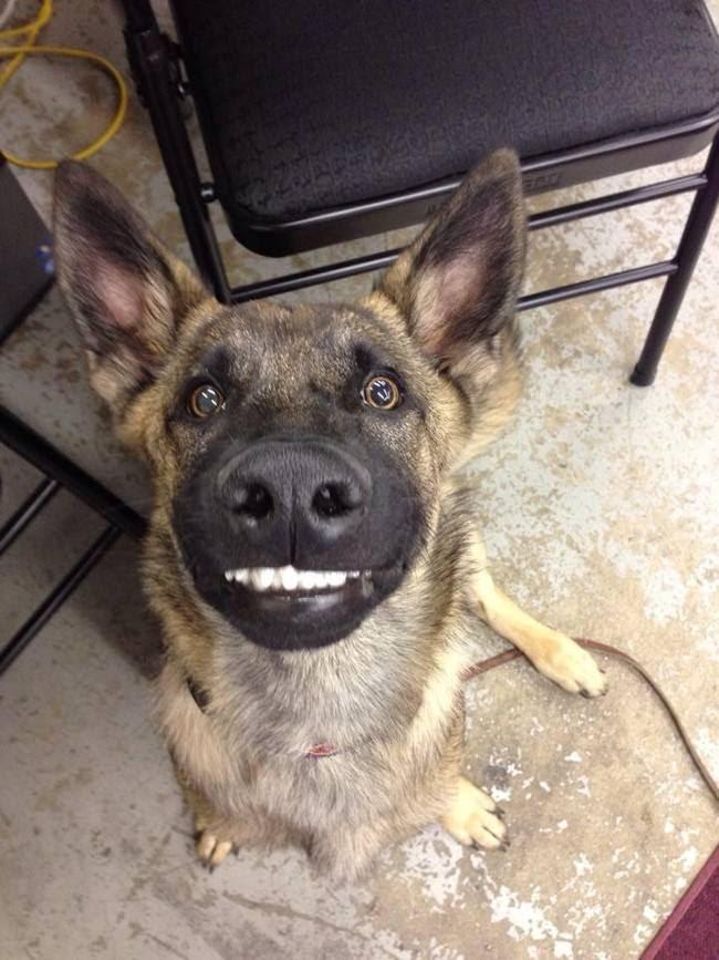 animais-sorrindo-8
