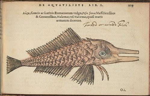 Pesce forca