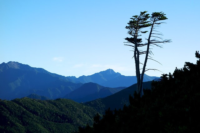 A tree and mountains